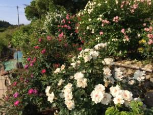 ヒミツの花園
