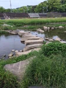 本明川飛び石②