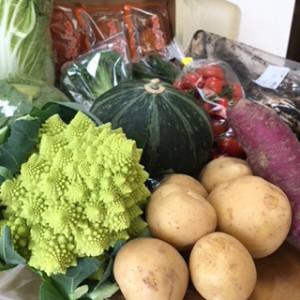 購入した野菜集合写真
